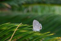 白浜クマソ - 蝶と自然の物語