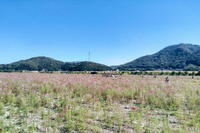 コスモス畑までサイクリング - 風見鶏日記