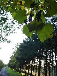 10月10日今日の写真 - ainosatoブログ02