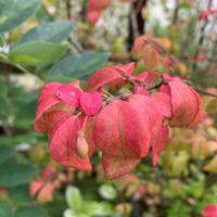 ローメンテガーデニングは低木使いがミソ - 花の庭づくり庭ぐらしガーデニングキララ