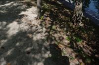 宇治川周辺横位置4 - カメラノチカラ