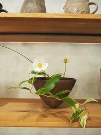 花とうつわ展3~明日からの営業のご案内 - うつわshizenブログ