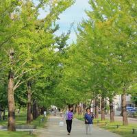 秋のお散歩 - 赤煉瓦洋館の雅茶子