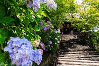 紫陽花咲く長谷寺 - 花景色-K.W.C. PhotoBlog