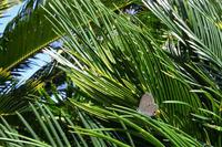 公園のクマソ - 蝶と自然の物語