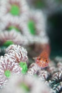 White&Green - Diving Life ~Aita pe'a pe'a~