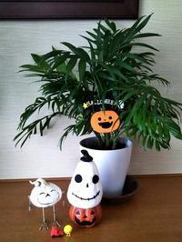 我が家のハロウィン飾り:テーブルヤシ - 健気に育つ植物たち
