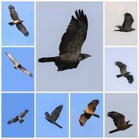 鷹の渡9 - 平さん