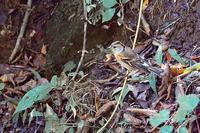 お山の水場は今…冬鳥と夏鳥が混在 - 上州自然散策2