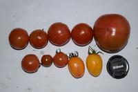 自然栽培ニンニク花豆の収穫 - 自然栽培 釧路日記