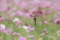 旬の鳥・・! - さすらい写人