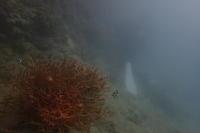 19.10.12沖縄は晴れてます - 沖縄本島 島んちゅガイドの『ダイビング日誌』