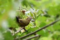西湖の鳥 - 暮らしの中で