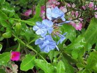 雨のベランダ - あるまじろの庭