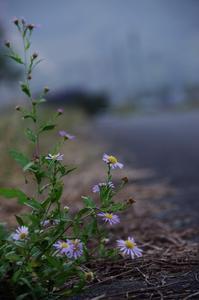 「あぜ道に咲く」 - 光と彩に、あいに。