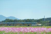 のぞみ*秋桜 - 気ままにお散歩