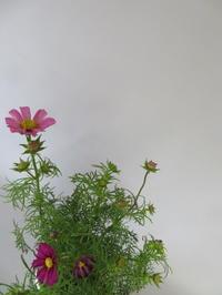 秋の花コスモスを楽しむ - 活花生活(2)