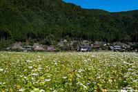 美山かやぶきの里 - toshi の ならはまほろば