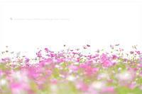 よく効くくすり - お花びより