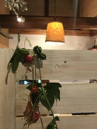 珍しいまん丸の瓜・・・「雀瓜がとどきました。」編 - ドライフラワーギャラリー⁂ふくことカフェ