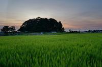 暮れの御陵 - katsuのヘタッピ風景