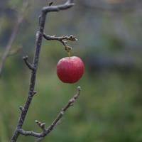 【りんごの木】20191013 - UZU