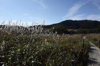 八島湿原⑤木道を歩く - 風の彩り-2