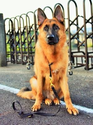 大型犬の同行避難を考える - 徒然てんぐさ
