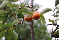 足立区桜花亭の庭園秋景色。 - 一場の写真 / 足立区リフォーム館・頑張る会社ブログ
