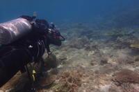 19.10.13沖縄は潜れてます - 沖縄本島 島んちゅガイドの『ダイビング日誌』