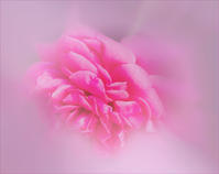 赤いバラ - 光 塗人 の デジタル フォト グラフィック アート (DIGITAL PHOTOGRAPHIC ARTWORKS)