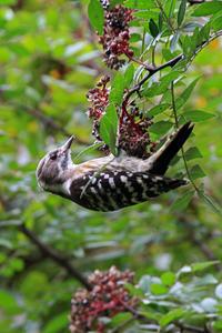 人気食堂。 - 季節の野鳥~Wildbirds archives