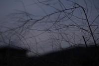 日暮れ色の風 - memephoto blog