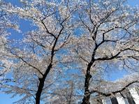 日本旅行 民泊 - 日向興発ブログ【方南町】【一級建築士事務所】