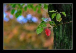秋の気配 - Desire