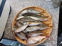 釣り人の食卓・・・アジフライ - 波止釣り放浪記 part3