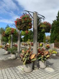 秋の植物公園で伝統園芸 - 花の庭づくり庭ぐらしガーデニングキララ