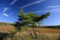 八島湿原⑥光る風 - 風の彩り-2