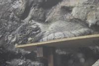 上野・真夏の夜の動物園2019④~明るい小獣館B1:跳べ!オオミユビトビネズミ!! - 続々・動物園ありマス。