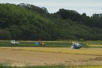 台風19号が来る前に急いでいる稲刈りです - 自然のキャンバス