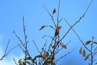 秋の空 - SWAN