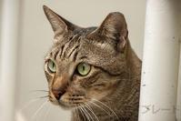 ご近所猫 2019.10.13 - Rayblade Photos
