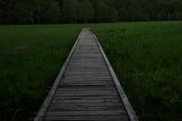 森へ行く道 - memephoto blog