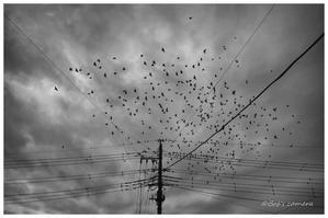 birds - BobのCamera