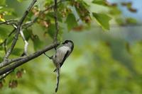 千里南公園でトケンに悩む(2019.10.6) - 週末バーダーのBirding記録