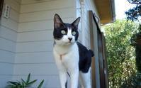 猫は三年飼っても三日で恩を忘れる - 東金、折々の風景