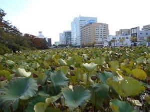 秋田市千秋公園へ - 小町の日々の暮らし