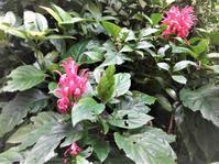 珊瑚花 - だんご虫の花
