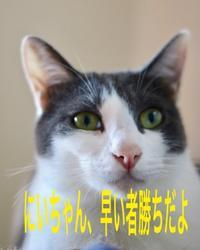 にゃんこ劇場「早いもの勝ち」 - ゆきなそう  猫とガーデニングの日記
