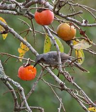実りの秋。 - 季節の野鳥~Wildbirds archives